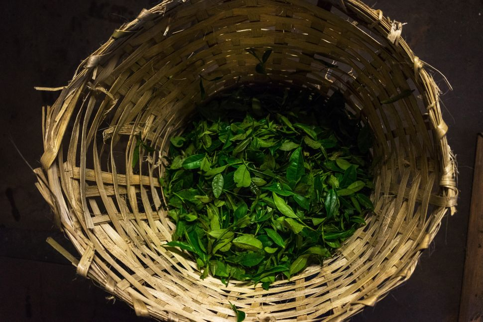 A basket of tea leaves sits on the floor of the Makaibari Tea Estate factory in Kurseong, West Bengal, India, on Monday, Sept