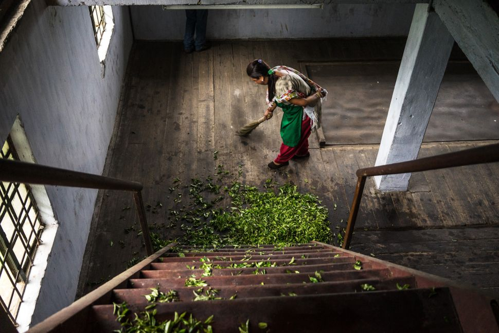 A worker sweeps spilt tea leaves at the bottom of a staircase a the Makaibari Tea Estate factory in Kurseong, West Bengal, In