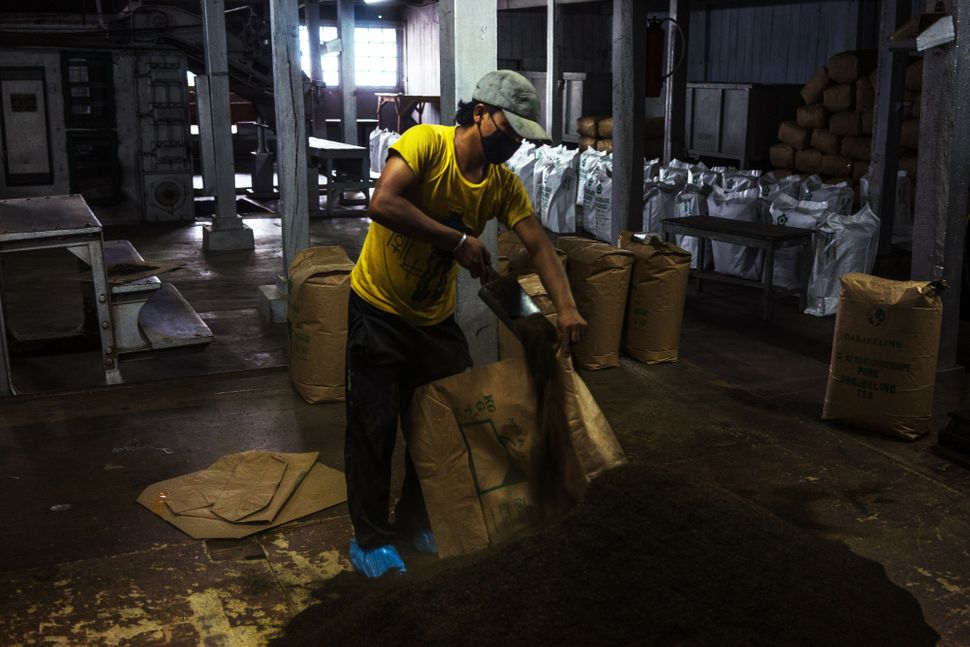 A worker shovels tea into bags at the packing section of the Makaibari Tea Estate factory in Kurseong, West Bengal, India, on
