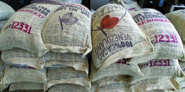 Il cacao più raro al mondo? Il Criollo, 5 cose da