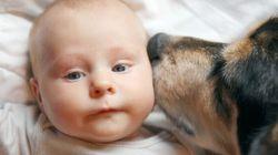 Perché i cani preferiscono alcune persone ad