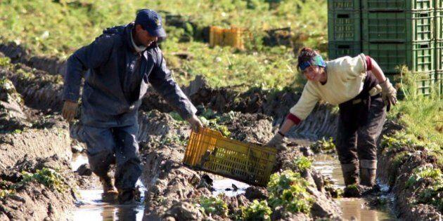 Paola Clemente morta ad Andria dove lavorava nei campi per 2 euro all'ora. Il marito:
