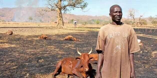 A picture taken on February 13, 2014 shows a sudanese man standing next to injured and dead cows following a reported aerial
