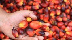 Senza olio di palma: l'unica scelta davvero