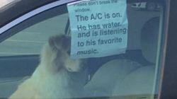 Il cane chiuso in auto e il messaggio: