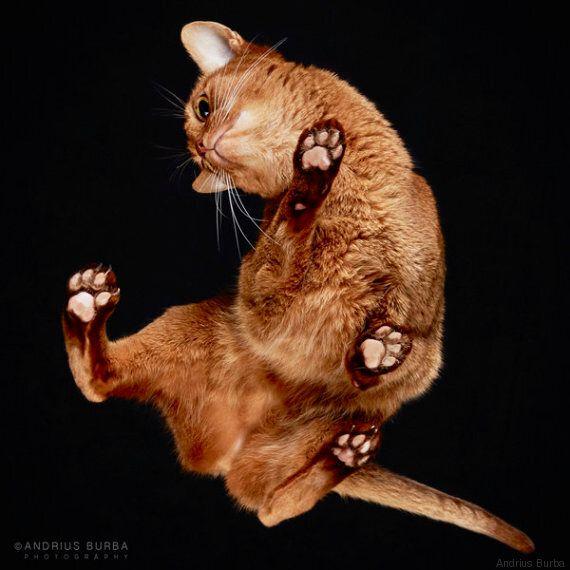 Le foto di questi gatti sulle fotocopiatrici sono divertentissime