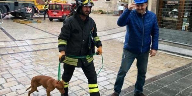 Norcia, un cane compare all'improvviso nella zona rossa, solo e affamato. Luca Barberini:
