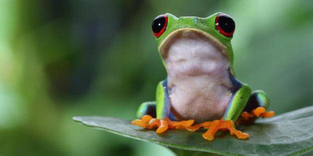 Api, rospi e muli: i 10 animali che prevedono la