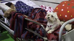 In questa foto c'è tutto l'affetto di un cane per il suo padrone sfollato ad
