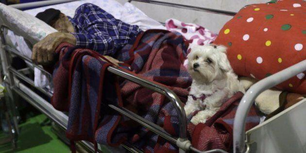 Terremoto Centro Italia, l'affetto di un cane per il suo padrone