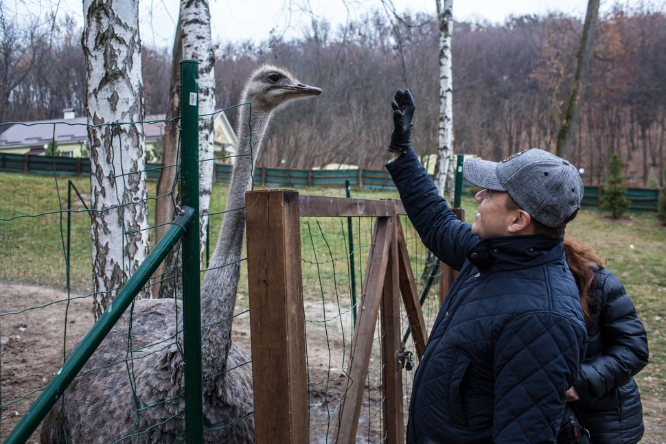 A visitor looks at an ostrich, one of many exotic birds kept on the property, at Mezhyhirya, the former private estate of fo