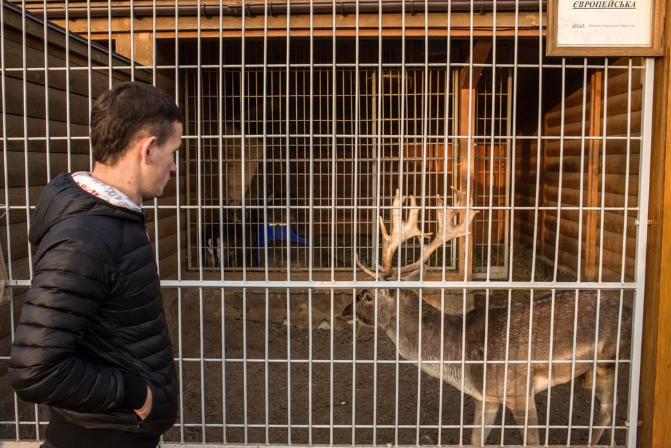 A visitor looks at a deer kept in a small zoo at Mezhyhirya, the former private estate of former president Viktor Yanukovych