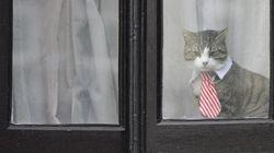 Assange è così annoiato che ha messo una stravagante cravatta al suo
