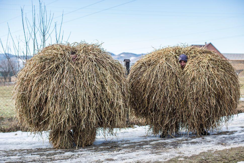 Villagers wearing hay bale costumes celebrate the winter festival of Malanka on January 14, 2015 in Krasnoilsk, Ukraine.