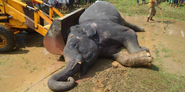 An excavator removes the carcass of an elephant after it was killed by poachers at Kothalguri village, in Nagaon district in