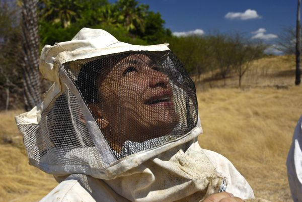 An apiarist works in Rio Grande Do Norte State, Brazil on Jan. 12, 2008.  (Lena Trindade/Brazil Photos/LightRocket/Getty Imag