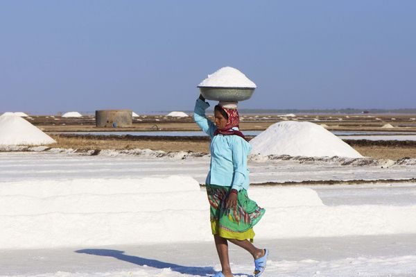 An Indian woman works collecting salt in the salt pans near Dhrangadhra, Gujarat.  (Malcolm Chapman/Getty Images)