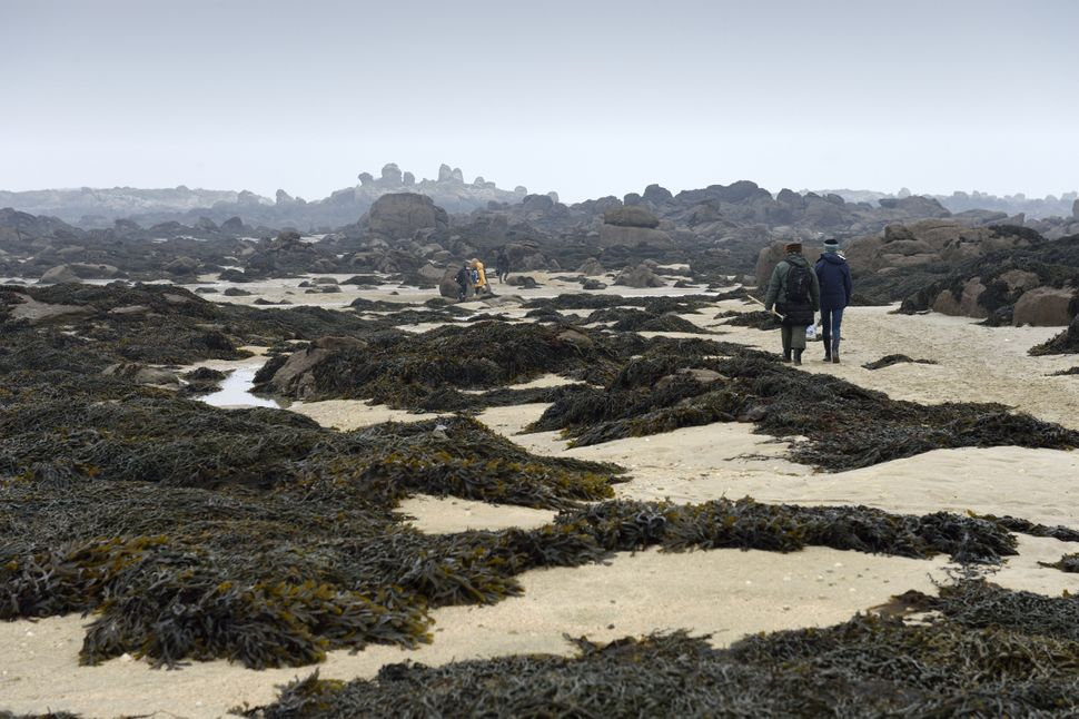 People walk on the beach to pick shells at low tide on March 21, 2015 on Chausey island, off Granville. Driven by the effects