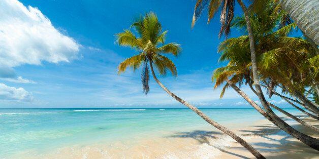 Palm tree at Pigeon Point Beach, Tobago.