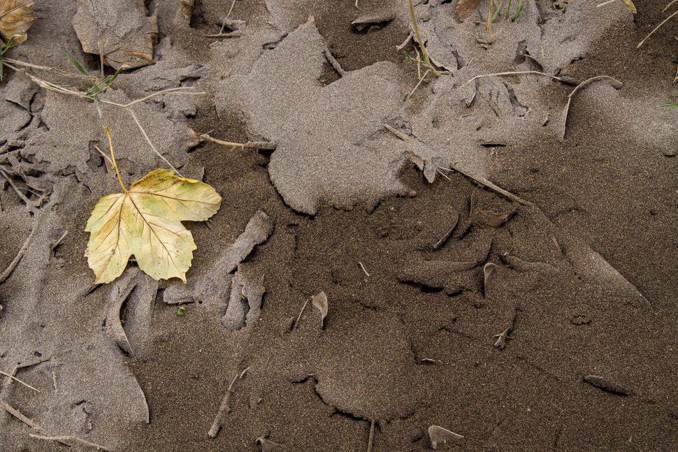 Leaves sit on ground covered by volcanic ash from Chile's Calbuco volcano in Villa La Angostura, southern Argentina, April 23