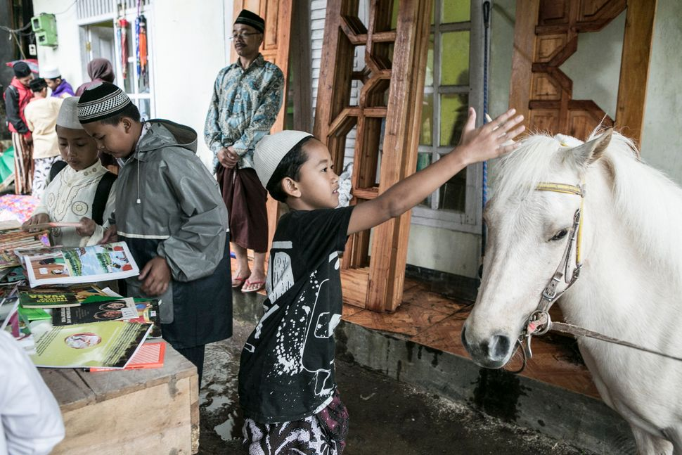 A boy plays with Luna in Serang Village on May 5, 2015.