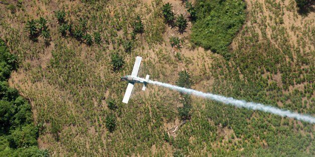 FILE - In this June 4, 2008 file photo, a police plane sprays herbicides over coca fields in El Tarra, in the Catatumbo river