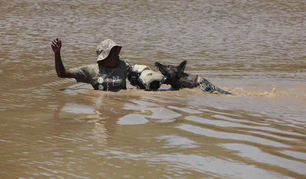 """In this photo taken Wednesday, Nov. 26, 2014 a dog chases down a """"rhino poacher"""" left, in water, in a simulation exercise sho"""