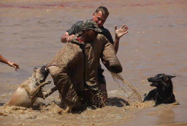 """In this photo taken Wednesday, Nov. 26, 2014 attack dogs and their handlers apprehend a """"rhino poacher"""" center, after alighti"""