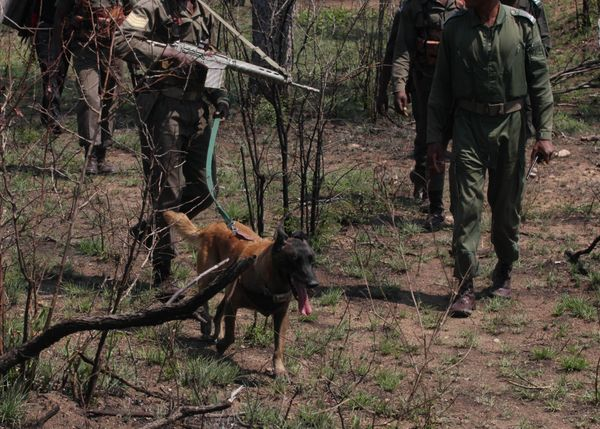 In this file photo taken Wednesday, Nov. 19, 2014 tracking rangers with their dog, re-enact how they work, in conjunction wit