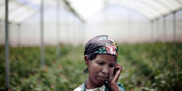 ETHIOPIA - MAY 09:  Sinayta Tshoma, a greenhouse worker, age 30, takes a break during a rose harvest at Minaye Flowers Plc fl