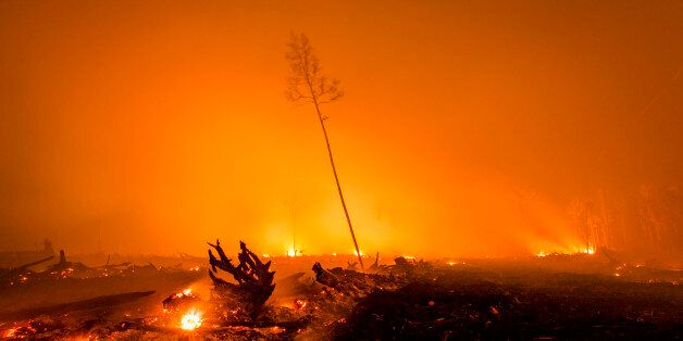 PALANGKARAYA, CENTRAL KALIMANTAN, INDONESIA - NOVEMBER 01:  A view of a land as peatland forest is cleared by burning for a p