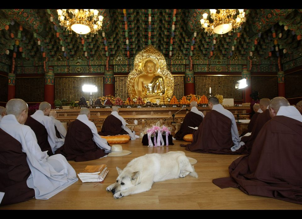 A dog lies down calmly on the floor as South Korean Buddhists monks participate in a service to celebrate the birthday of Bud