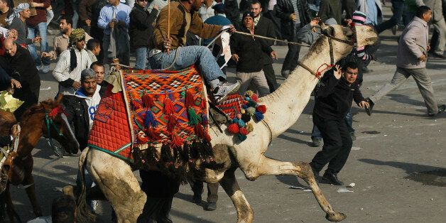 CAIRO, EGYPT - FEBRUARY 02: A supporter of embattled Egyptian president Hosni Mubarek rides a camel through the melee during