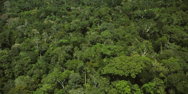 AMAZON RAINFOREST, AMAZONAS STATE, BRAZIL - 2016/01/09: Aerial view of intact preserved dense forest with high biodiversity -