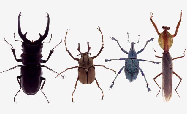 Τουρκία: Ανακαλύφθηκαν τρία νέα είδη εντόμων στην περιοχή του