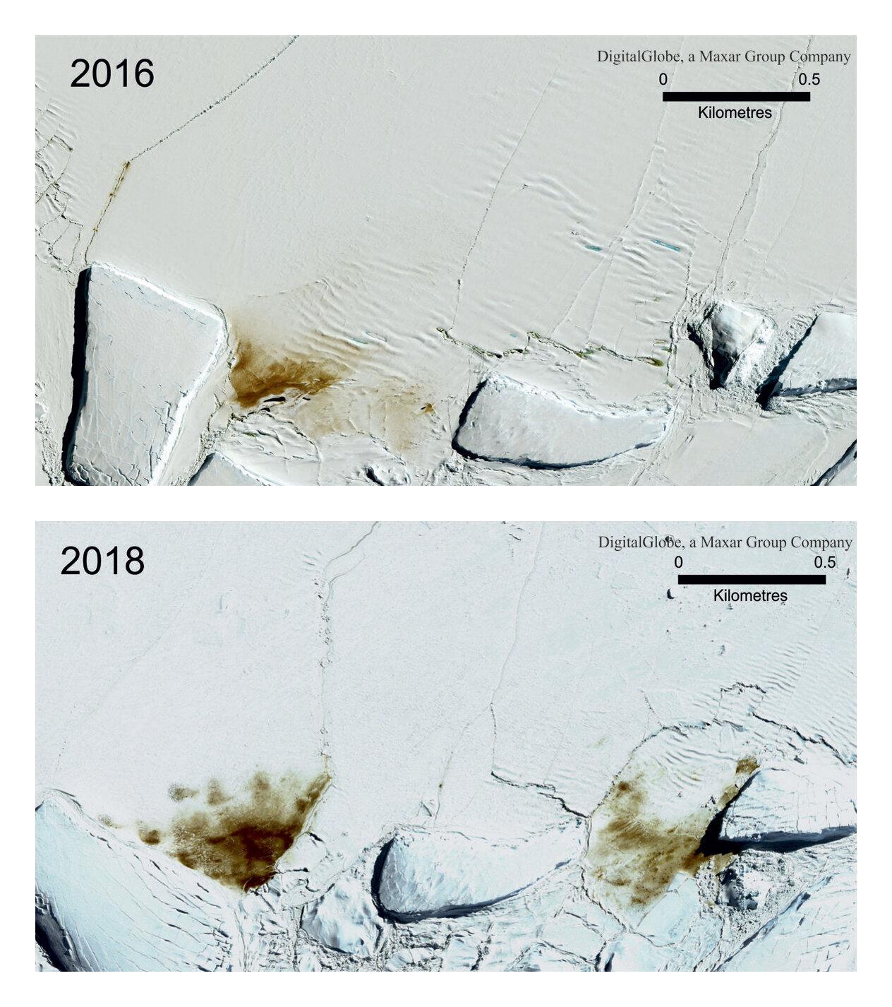 The site of the Dawson Lambton emperor penguin colony in 2016 and 2018. (Maxar Technologies/British Antarctic Survey via AP)