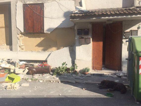 Kid, il cane di Pescara del Tronto che non vuole lasciare la casa distrutta dal sisma (FOTO,