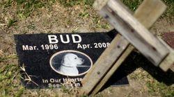 Padrone e animale domestico sepolti vicini: è possibile a New