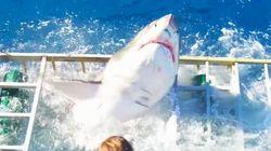 Il sub è nella gabbia, lo squalo bianco la rompe e