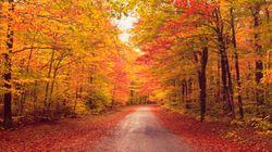 Non scusatevi per la vostra ossessione per l'autunno. È