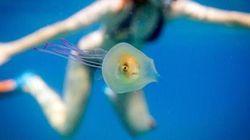 La vera storia dietro il bellissimo scatto del pesce intrappolato nella