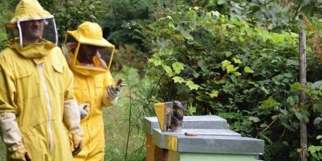 3bee, tre giovani italiani creano l'alveare hi-tech che salva le api. L'invenzione premiata dalla Fondazione