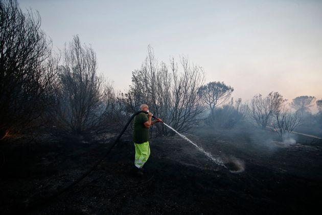Foto Vincenzo Livieri - LaPresse 17-07-2017 - Roma Incendio nella pineta di Castel Fusano, vicino Ostia...