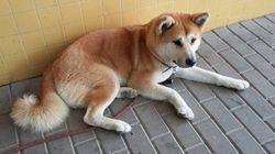 L'attesa interminabile di questo cane è una dimostrazione di
