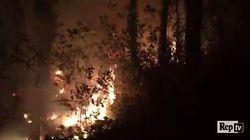 Brucia la riserva naturale degli Astroni: del gioiello verde gestito dal WWF resta