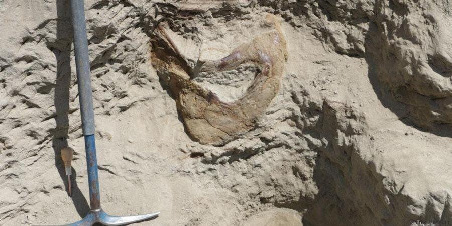 Trovato lo scheletro di un Tyrannosaurus Rex ad Hell Creek, il parco che ha ispirato Jurassic