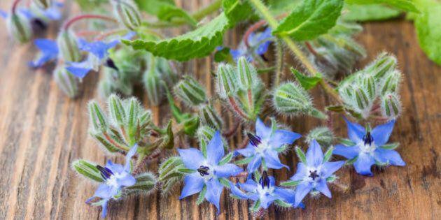 I fiori nel piatto fanno anche più bene delle verdure: lo rivela uno studio all'avanguardia dell'Università...