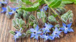 Mangiare fiori rallenta l'invecchiamento: parola dell'Università di