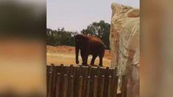 Un elefante uccide una bimba di 7 anni allo zoo di Rabat, in