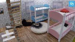 Kattarshians: in Islanda un Grande Fratello sui gatti per una buona